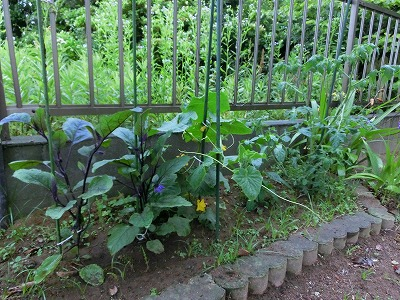 庭の野菜さん