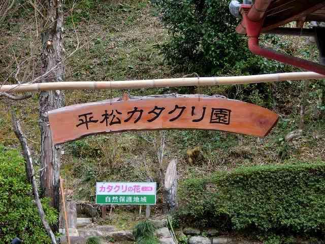 平松カタクリ園1