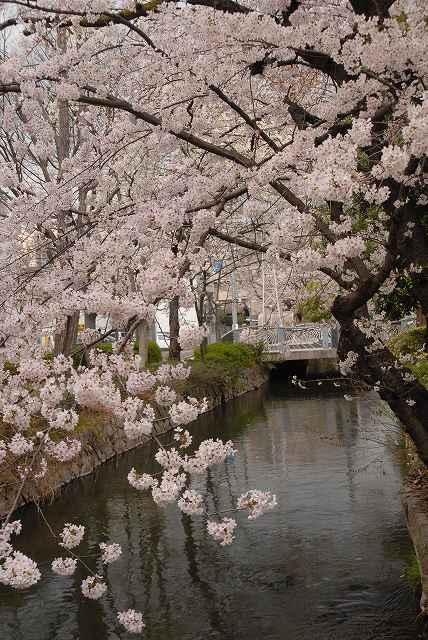 西川緑道公園7
