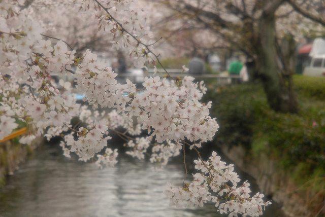 西川緑道公園9