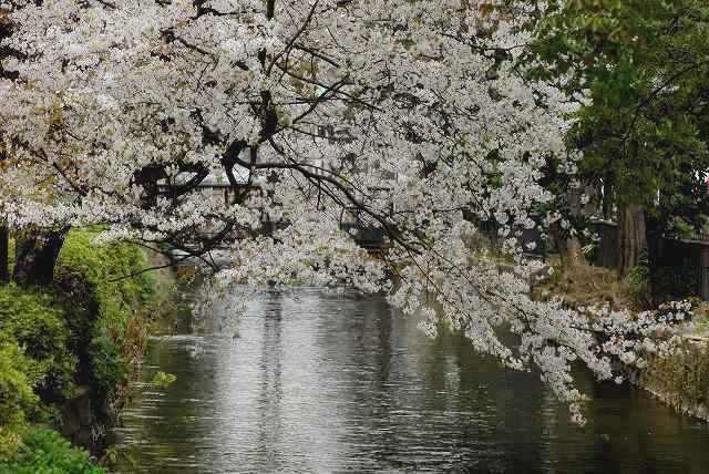西川緑道公園14