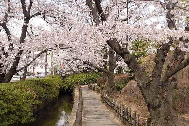 枝川緑道公園2