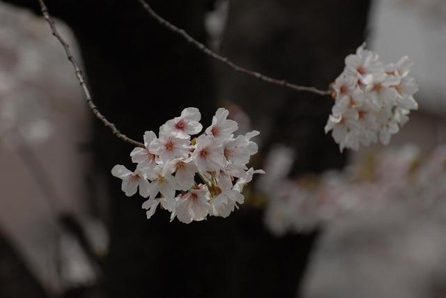 枝川緑道公園7