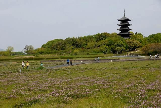 国分寺のレンゲ畑2