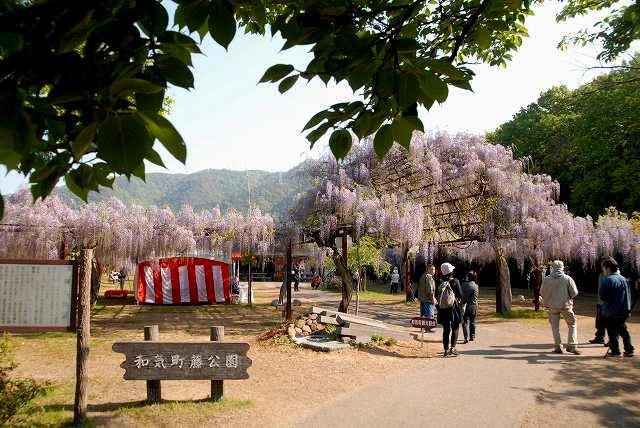 和気町藤公園1