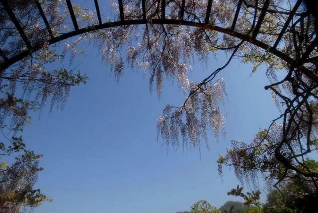 和気町藤公園6