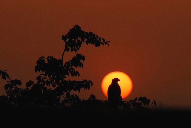 児島湖の夕陽(鳶職人)1
