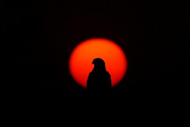 児島湖の夕陽(鳶職人)2