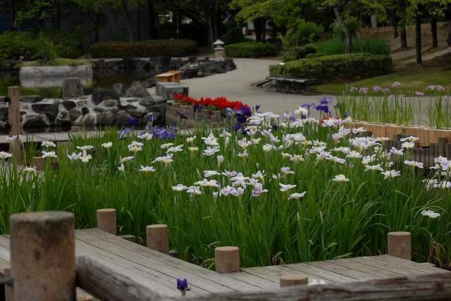 あやめ池公園3