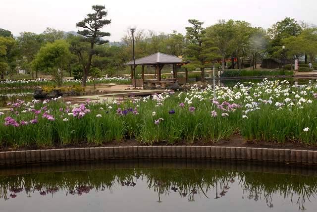 あやめ池公園10