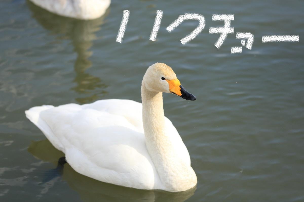 15_20131229134746352.jpg