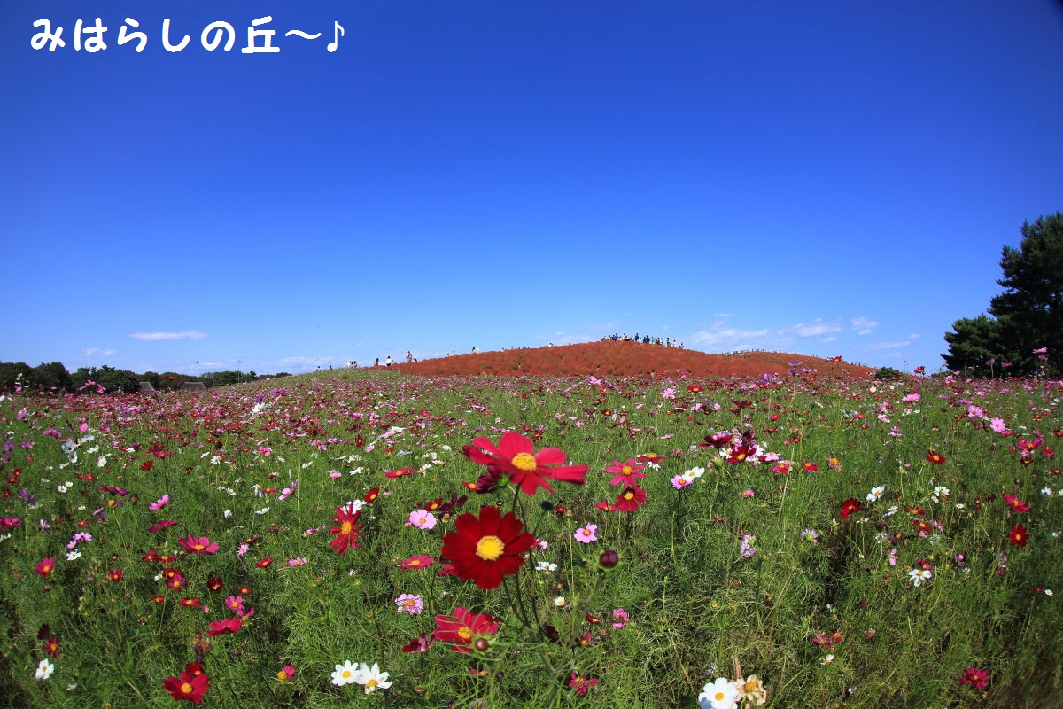 1_201310201913526fd.jpg