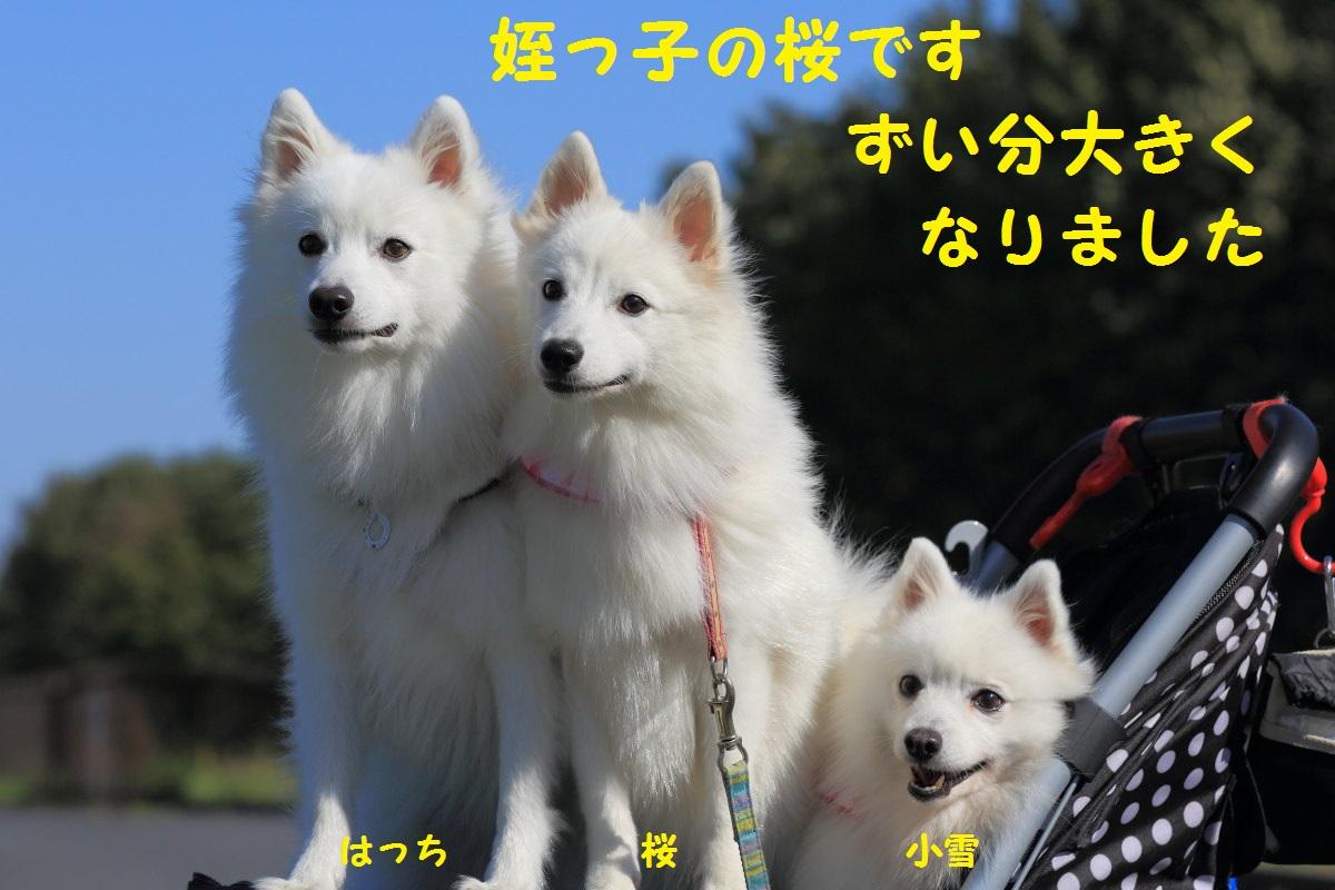 3_20131018070105da0.jpg