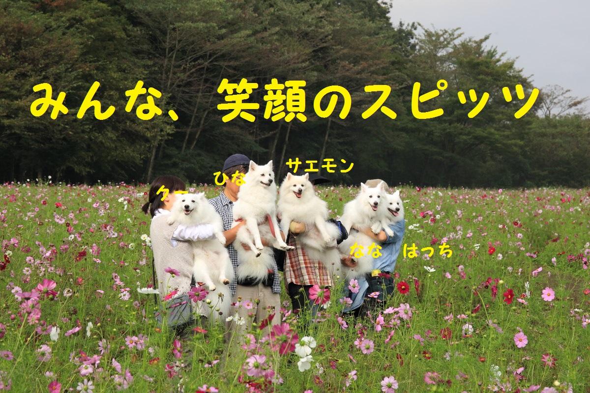 5_2013101720350645d.jpg