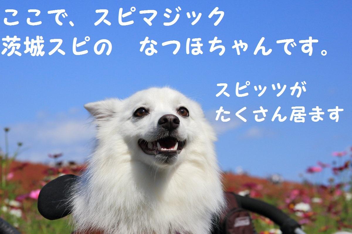 6_20131020191340fcf.jpg