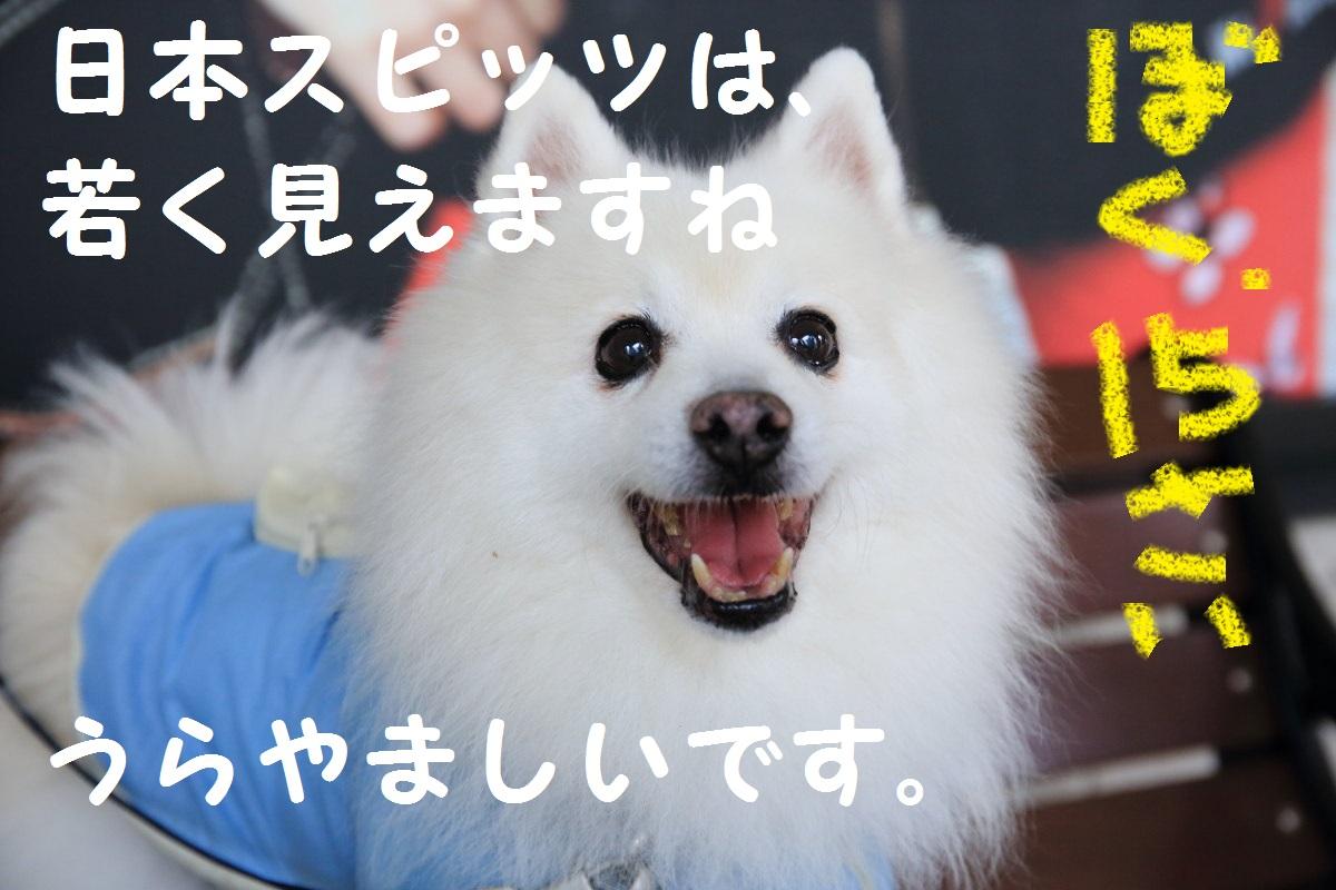 9_2013101620523412d.jpg