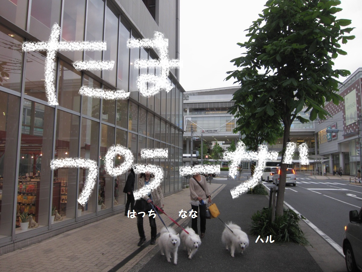 DPP_4896.jpg
