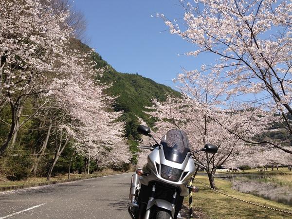 Asakura6.jpg