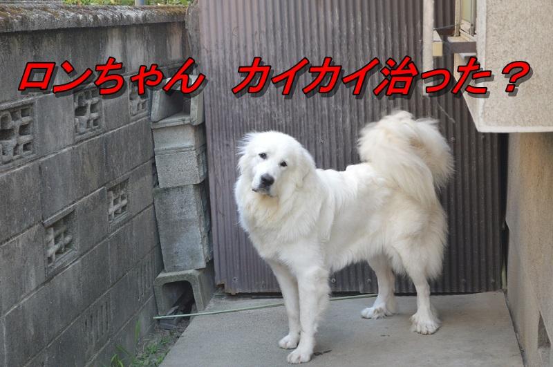 20130823231932493.jpg