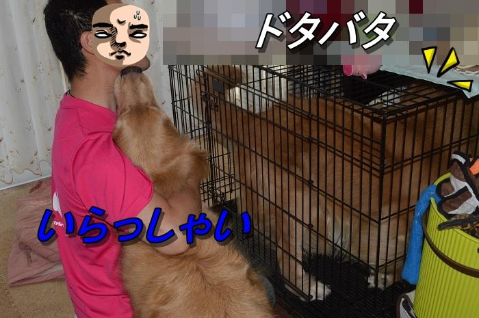 DSC_0024_20130909205941597.jpg
