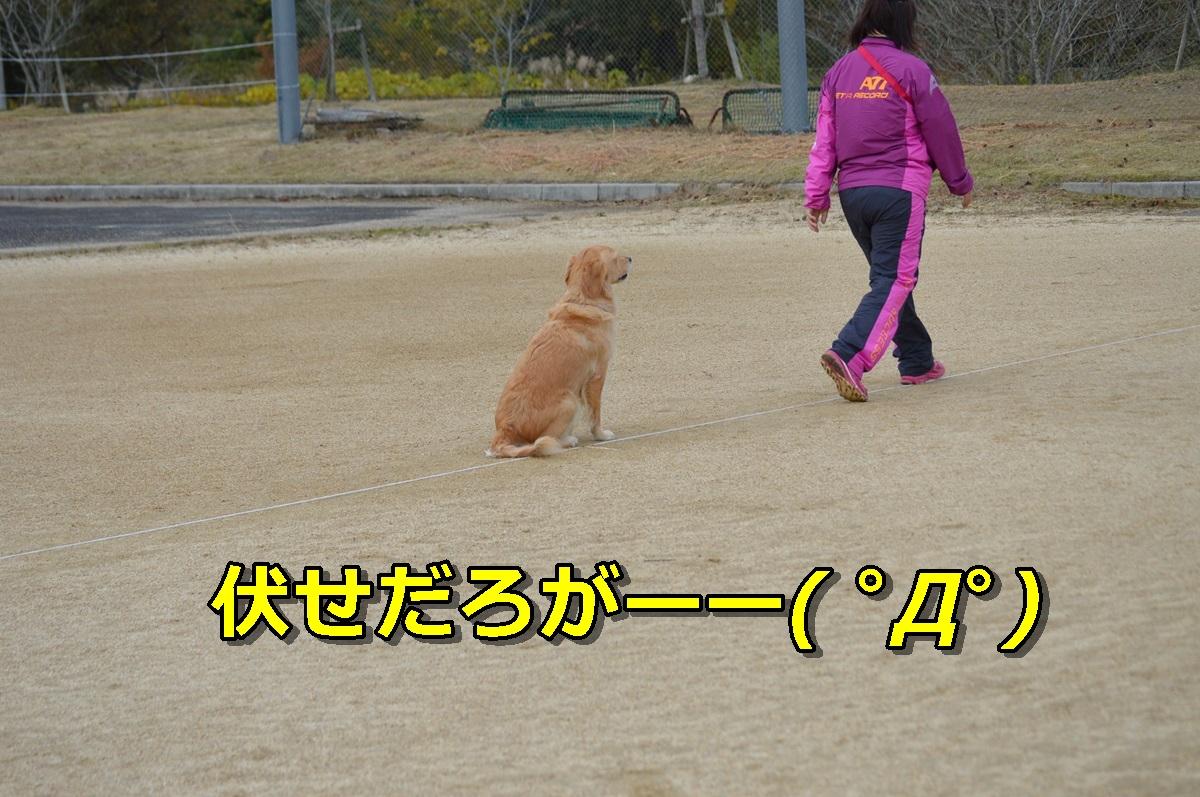 DSC_0064-024.jpg