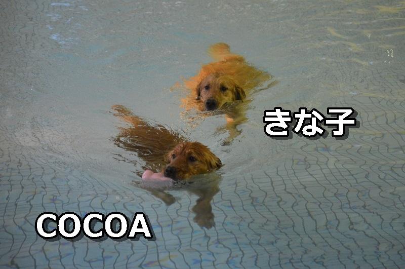 DSC_0096-096.jpg