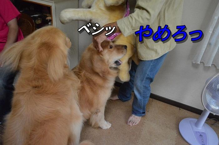 DSC_0116_201309092100300f5.jpg