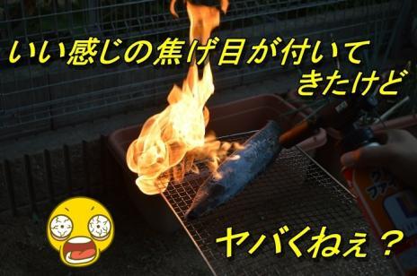 DSC_0164_20130725165128.jpg