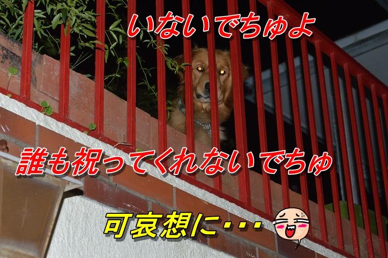 DSC_0189_20130916210232af7.jpg