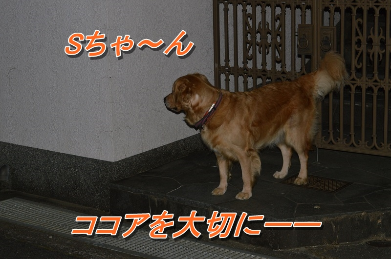 DSC_0212_20130916210313e51.jpg