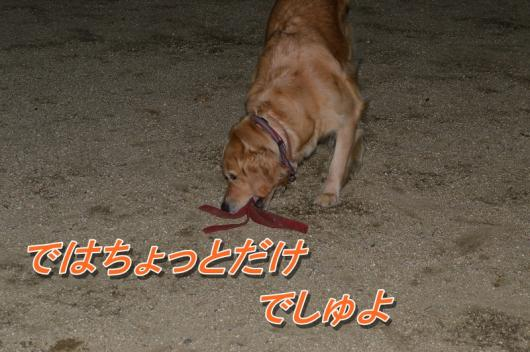 DSC_0214_20130916210310ca9.jpg