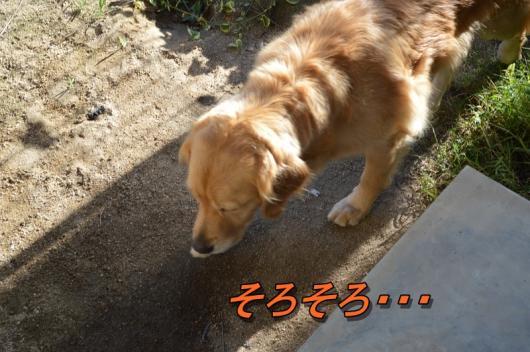 DSC_0216_20130917211938381.jpg