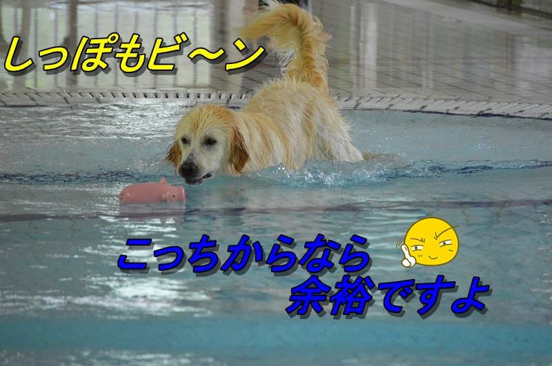 DSC_0263_20130728211920.jpg