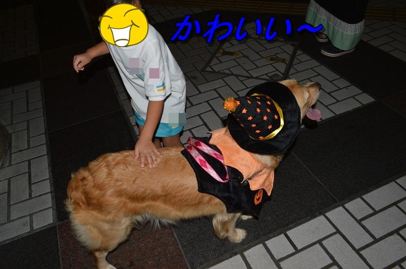 DSC_0301_20130921220414df8.jpg