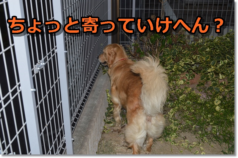 DSC_0348-002.jpg