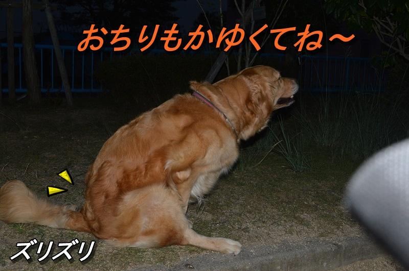 DSC_0436_20130801221420f81.jpg