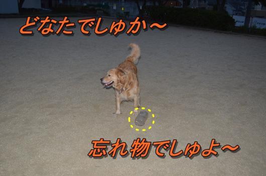 DSC_0441_20130801214954621.jpg