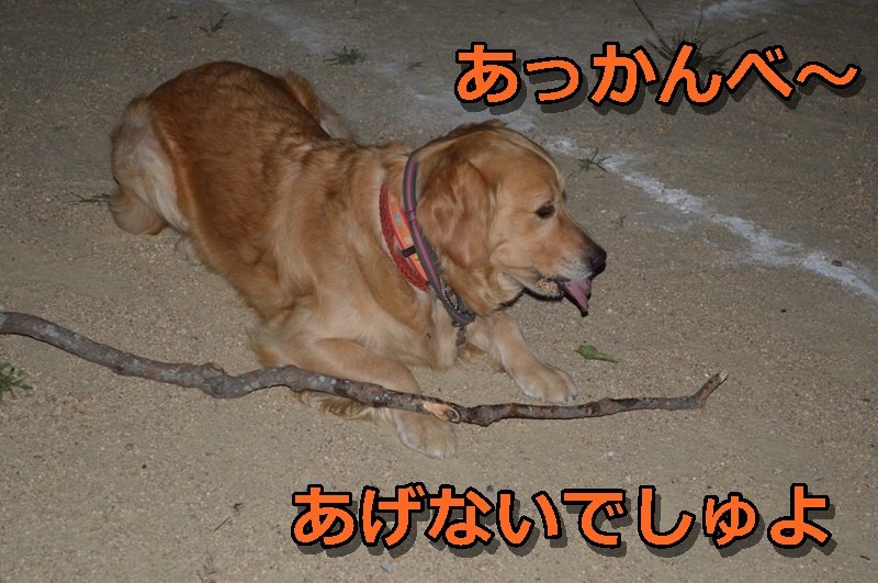 DSC_0490-014.jpg