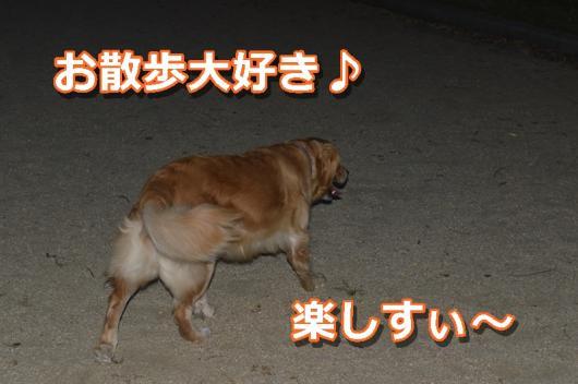 DSC_0510-002.jpg