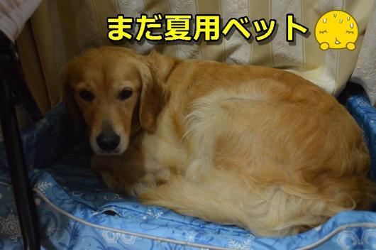 DSC_0533-008.jpg