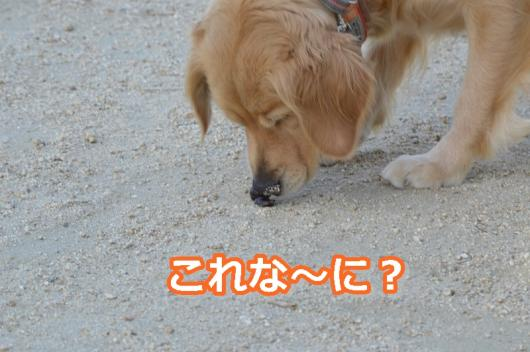 DSC_0604-019_2013100412432801d.jpg