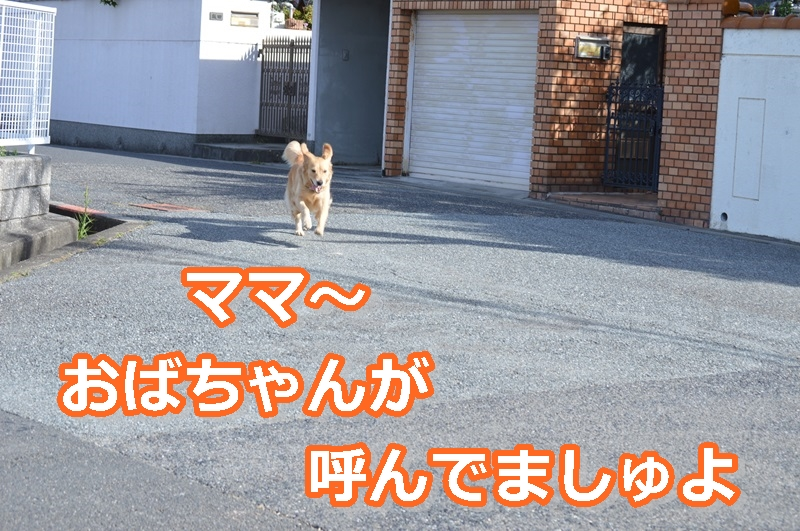 DSC_0647-062o.jpg