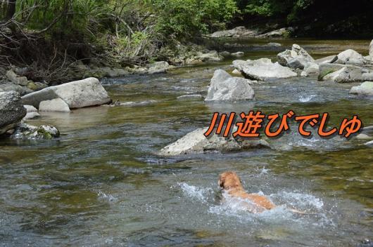 DSC_0658_20130803212014e83.jpg
