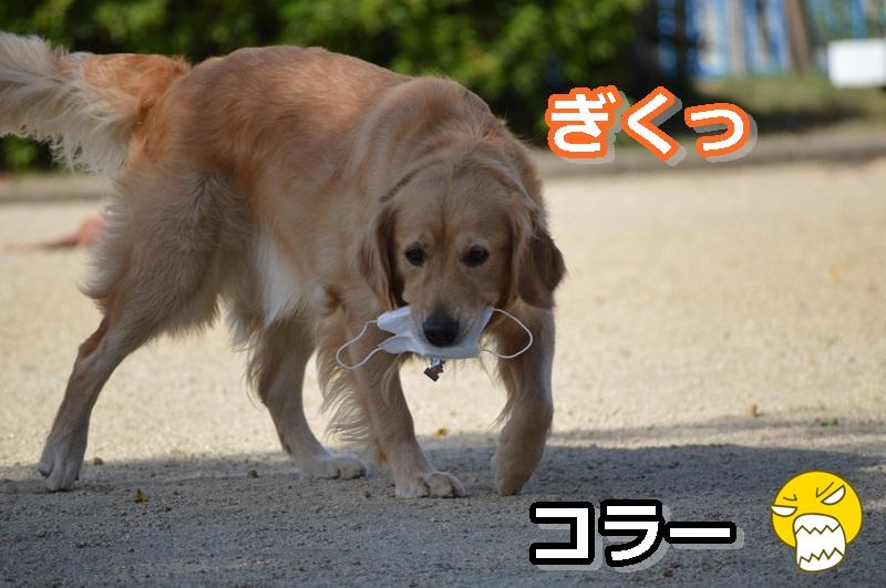 DSC_0695-110.jpg