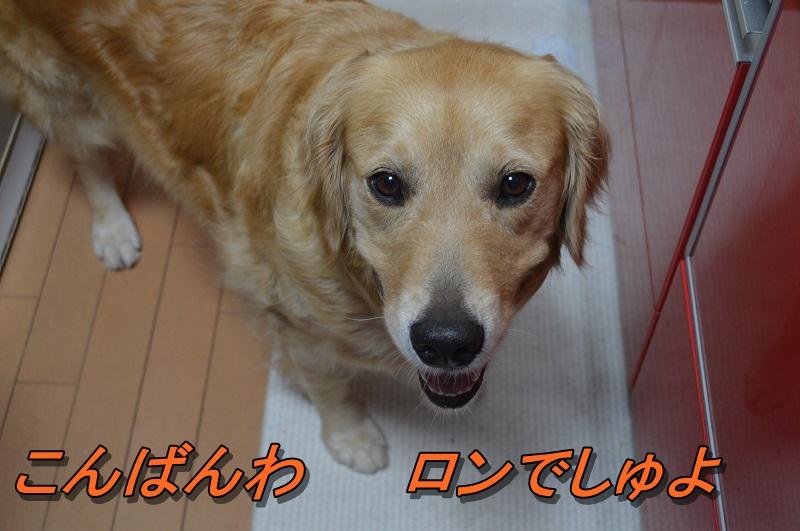 DSC_0768_201308072100578a3.jpg
