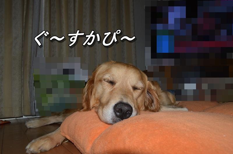 DSC_0812_20130810212050e1c.jpg