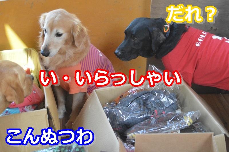 DSC_0817-001.jpg