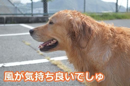 DSC_0861-020.jpg