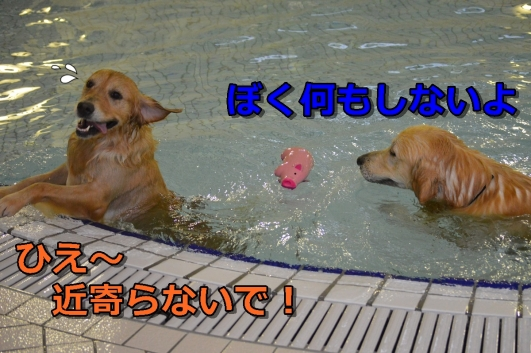 DSC_0883-088.jpg