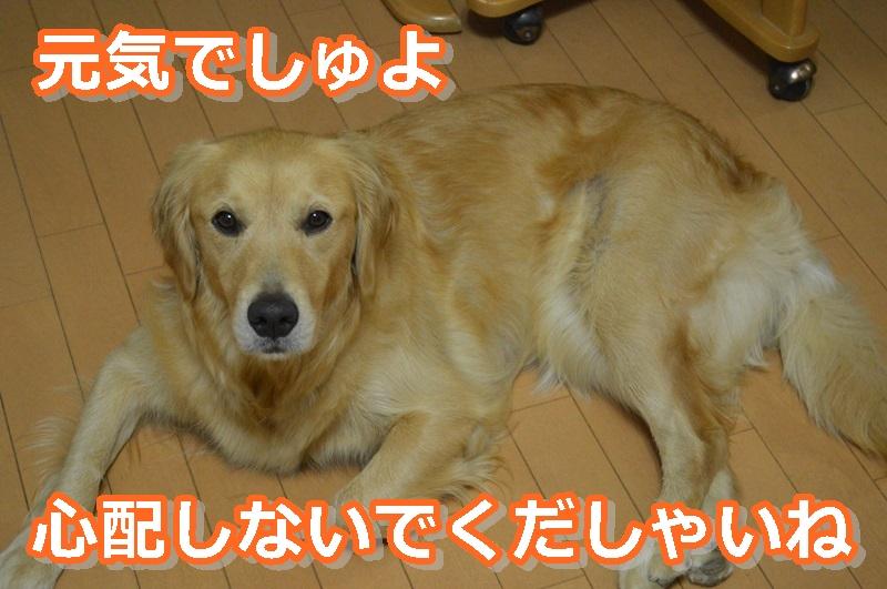DSC_0923-014.jpg